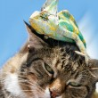 Portrait of a domestic cat close up with a chameleon on his head — Stock Photo #62019379
