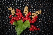 Red and white or yellow currant on the raw black currant background — Stock Photo