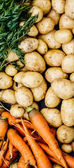 Mixed raw vegetables background — Stock Photo
