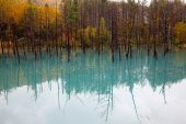 A Beautiful Blue Pond in Hokkaido, Japan — Stock Photo