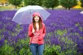 Woman with Umbrella at Tomita Lavender Farm, Hokkaido — Stock Photo