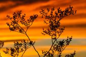 Plant in the sunset — Stock fotografie