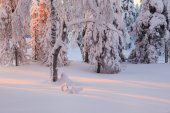 Magic sunrise in the snowy forest — Stockfoto