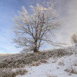 Frosted trees against a blue sky on a sunny morning.  — Foto Stock #56455647