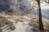 Frosted branches of trees in the beautiful winter forest — Stok fotoğraf