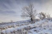 Winter snowy landscape with a frosted white tree  — Stockfoto