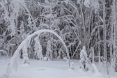 Beautiful snow-covered trees — Foto de Stock