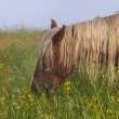 Horse grazing on a beautiful flower misty meadow — Stock Photo #65902031