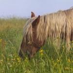 Horse grazing on a beautiful flower misty meadow — Stock Photo #65902031