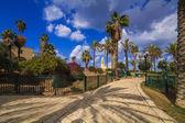 A beautiful promenade with palm alley. Jaffa, Tel Aviv. Israel. — Foto de Stock