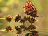 Reflection a beautiful butterfly on a flower — Stockfoto
