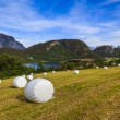 Haying in the field. Picturesque rural landscape. Norway. — Stock Photo #70014771