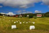 Haying in the field. Picturesque rural landscape. Norway. — Stock Photo