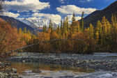 Autumn landscape with mountains, river and yellow trees. — Stock Photo