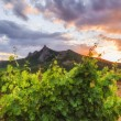 View of the vineyards and mountains in the background of the sun — Stock Photo #78371014