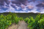 Beautiful landscape overlooking the vineyards and high mountains — Stock Photo