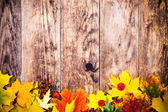 Autumn background, colorful tree leaves. — Stock Photo