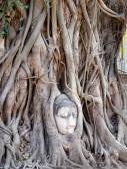 Buddhist temples  — Stock Photo
