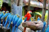 Big beautiful macaws — Stock Photo