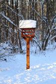 Floresta de Inverno de bonito — Fotografia Stock