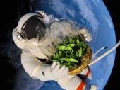 Seedlings in space. — Stock Photo