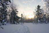 Landscape. winter forest — Stock Photo