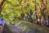 Maple Tree Tunnel — Stock Photo