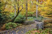 Fall Gardens — Stock Photo