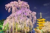 Kyoto Pagoda in the Spring — Stock Photo