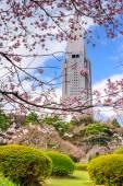 Shinjuku Gyoen Park in the Springtime — Stock Photo