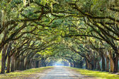 Country Road Lined with Oaks — Stock Photo