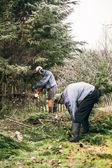 Gardeners pruning tree — Stock Photo