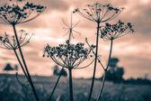 Dry meadow flowers — Stock Photo