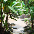 Tropical rainforest in Langkawi Island — Stock Photo #61700991