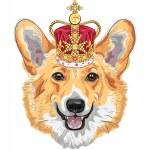 Vector sketch dog Pembroke Welsh corgi smiling in gold crown — Stock Vector #52399059