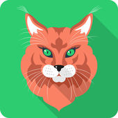 Vector Cat Maine Coon icon flat design — Stock Vector