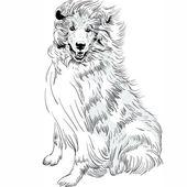 Vector sketch dog Rough Collie breed hand drawing vector — Vecteur