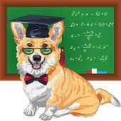 Vector graduated dog Pembroke Welsh corgi — Stock Vector