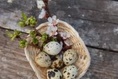 Happy easter with flowers and quail eggs — Stock Photo