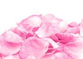 Růží — Stock fotografie