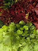 Different types of lettuce and spicy herbs — Stock Photo