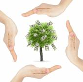 Hands made circle with money tree — Stock Photo