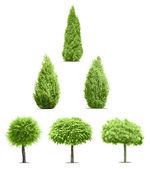 Six green trees — Stock Photo