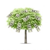 Tree with money growing on it — Stock Photo