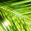 Green palm leaf background — Stock Photo #63985221