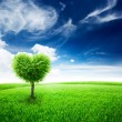 Green field with heart shape tree — Stock Photo #65051343