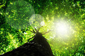 Tree with green Leaves and sun light — Stock Photo