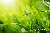 Gotas de agua sobre la hierba verde — Foto de Stock