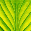 Green leaf close-up — Stock Photo #65677435