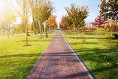 Alleyway in autumn park — Stock Photo